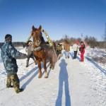 2014_vadochyshcha_horse01.jpg
