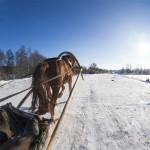 2014_vadochyshcha_horse2.jpg