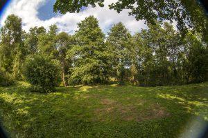 Поляна у ручья, окружённая деревьями