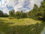 большая поляна для корпоративов и палаток, березовая роща