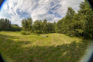 Большая поляна под палаточный городок и берёзовая роща